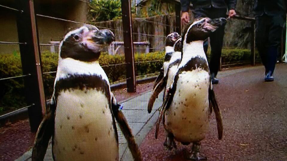 横尾渉 ペンギン