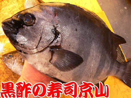 文京区 宅配寿司 白山