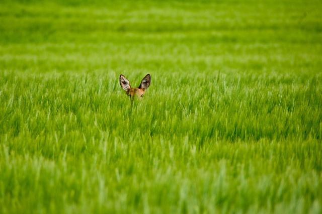 0720 Bambi001.jpg