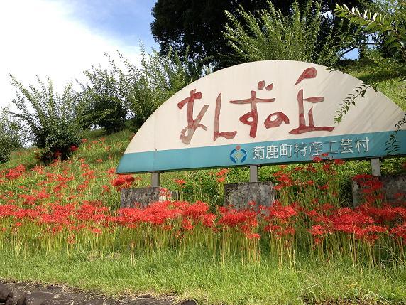 あんずの丘.jpg