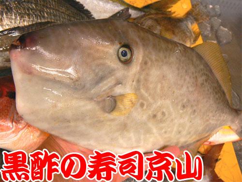 中央区 寿司 出前 八重洲