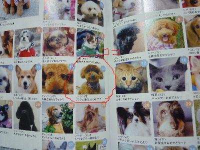 リンク 犬吉猫吉.JPG