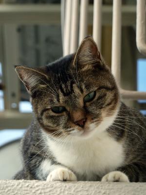 【かわいい猫ちゃん】 画像あり | まこの部屋 - 楽天ブログ