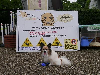 2012昭和記念公園1.JPG