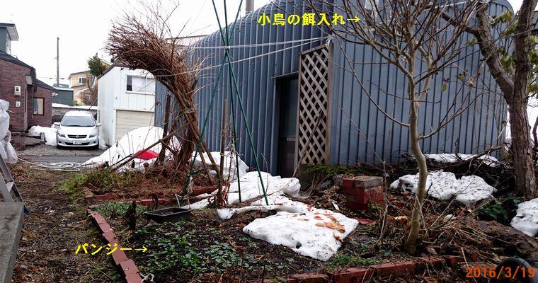3/19庭の雪もすっかり解けて.jpg