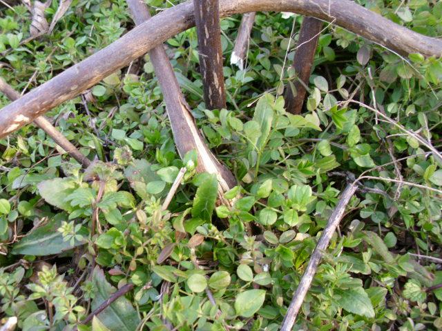 展望台そばの畑201202203