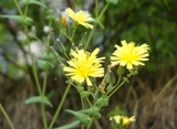 20120602 silgyecheon flower 2.jpg