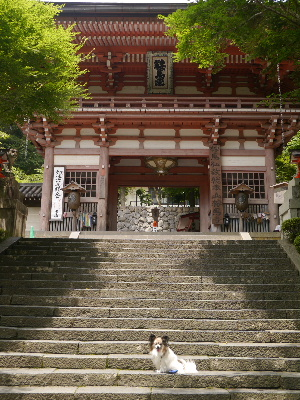 2012京都夏3−51.JPG