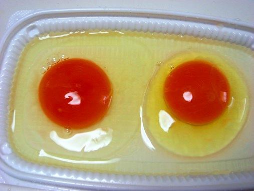 卵の比較.jpg