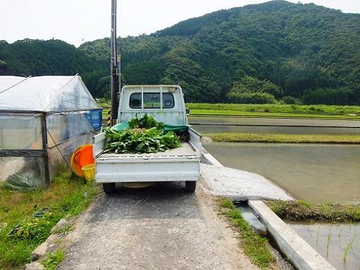 軽トラ一杯.jpg