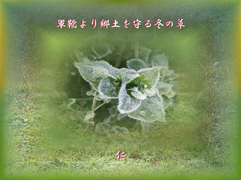フォト575sm1404『 軍靴より郷土を守る冬の草 』