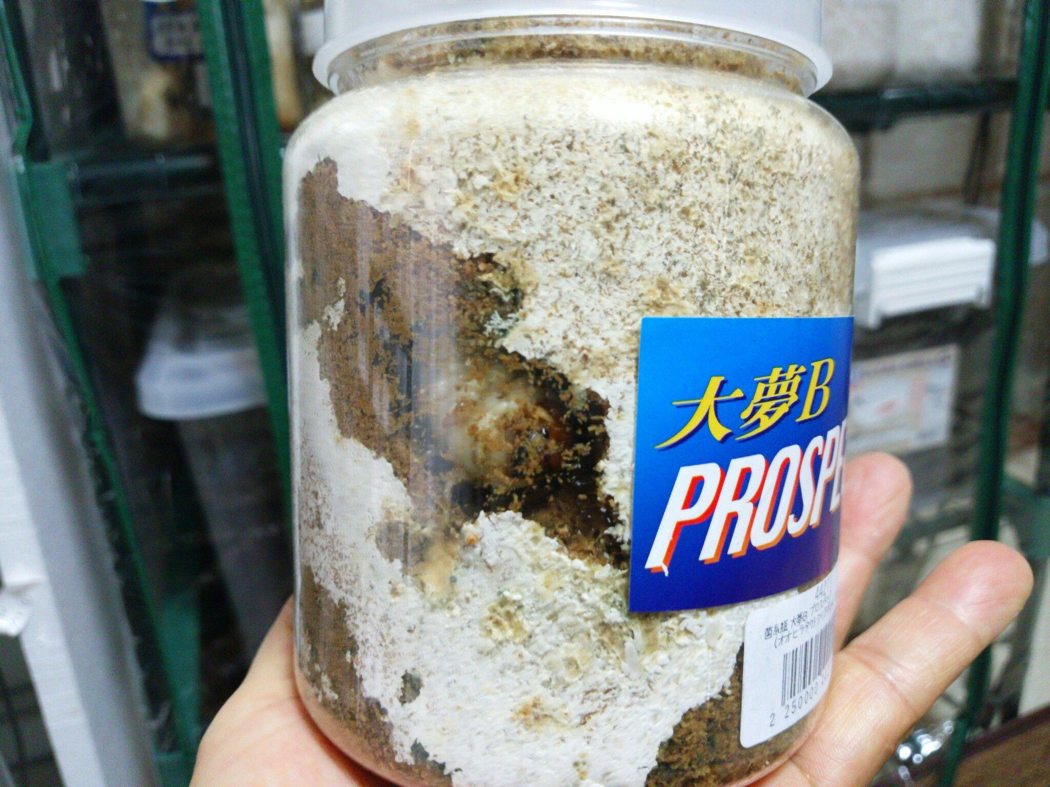 交換 菌糸 ビン