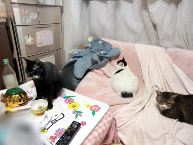 サラリーマン猫ニャンタと仲間たち