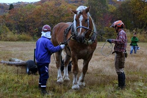 馬搬 ヨーロッパ式