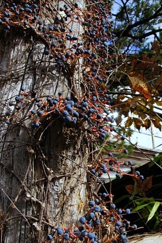 和泉屋旅館 木の実