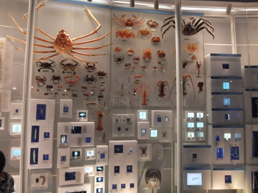 甲殻類.jpg