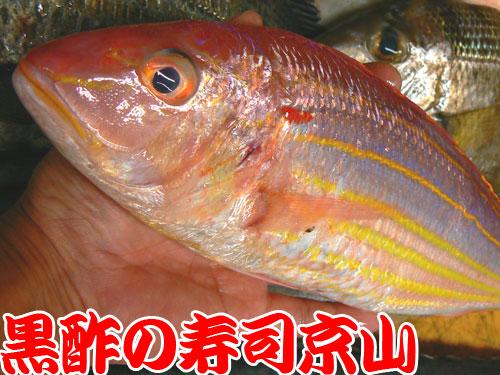 中央区 寿司 出前 京橋