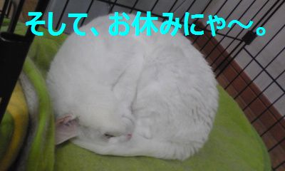 お休みにゃ.jpg