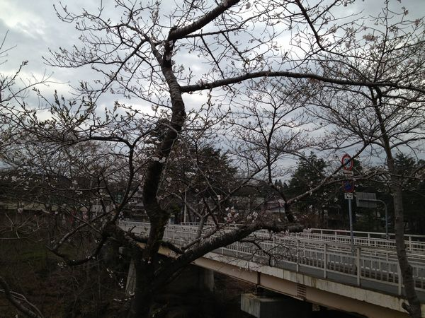 20130425厳美渓桜4