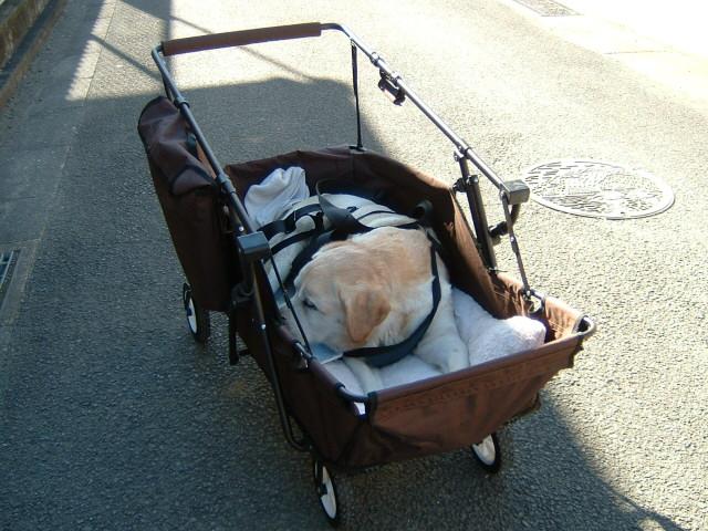 大型犬のカート   初めてのブログ - 楽天ブログ