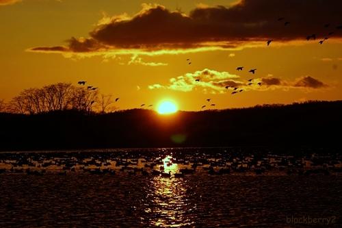 Miyajima Marsh,Wild Goose