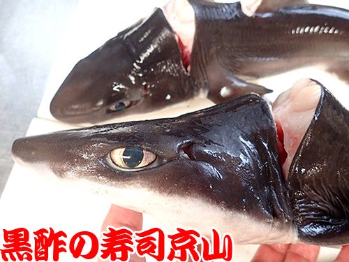 フトツノザメ 深海魚