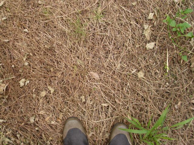ヘアリーベッチの天然マルチ20120709