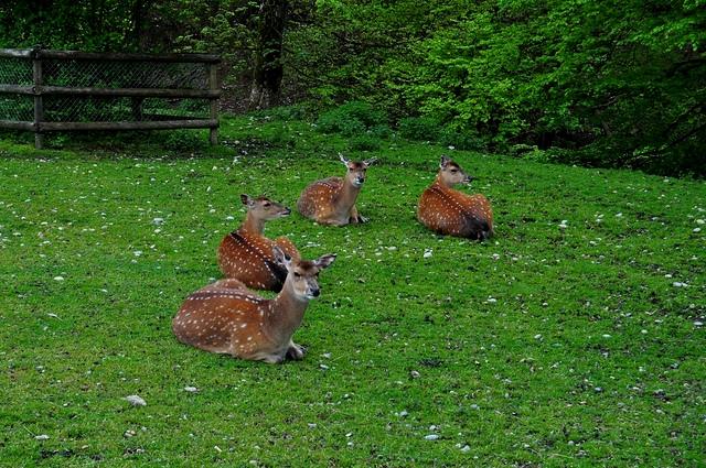 0720 Bambi01.jpg