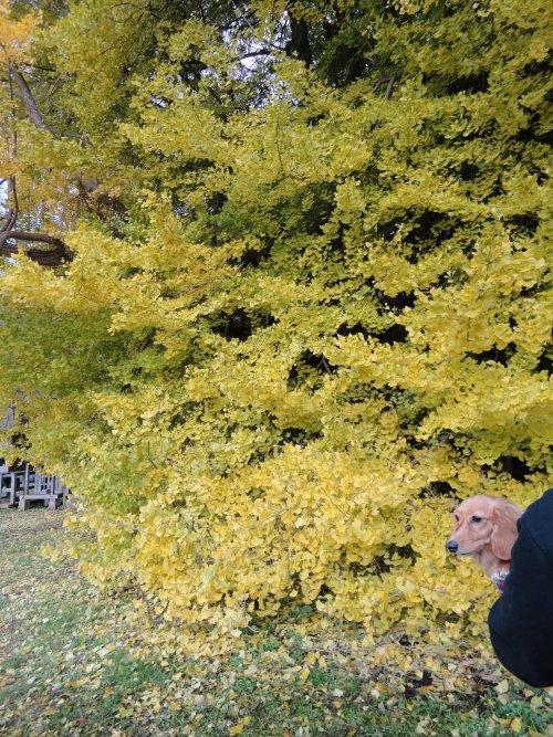 黄色いね~