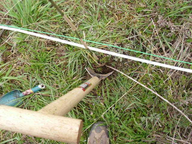 野生葡萄植え付けの最初の一掘り