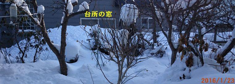 1/23お隣さんの屋根の下.jpg