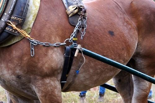 馬搬 留め具