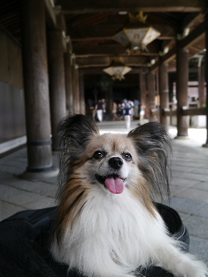 2012京都夏11.JPG