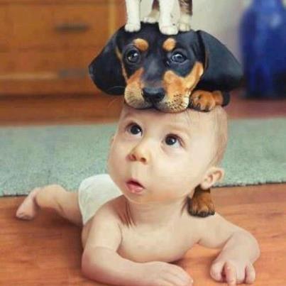 頭に乗る犬と赤ちゃん