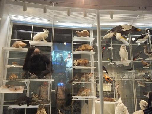 哺乳類と俺と鳥類.jpg