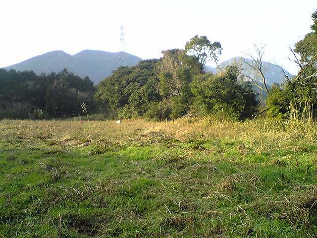 葡萄畑20120310