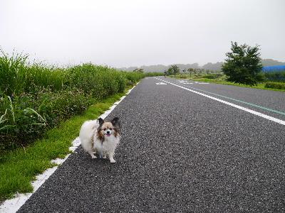 2012手賀沼2.JPG