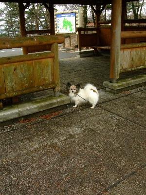 2012いちご狩り2-6.JPG