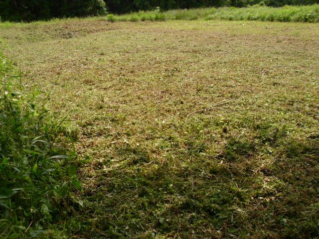 大きい畑の旧おかぼ区画草刈り直後20120614