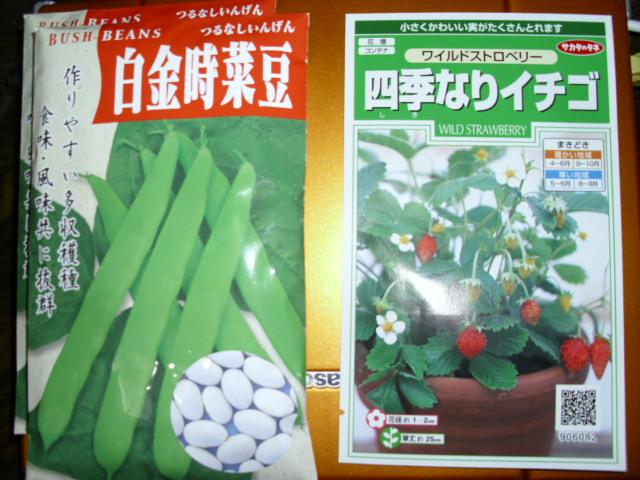 白金時菜豆とワイルドストロベリーの種20120406