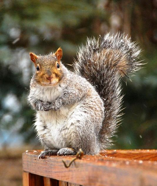 +0222 friend squirrels04.jpg