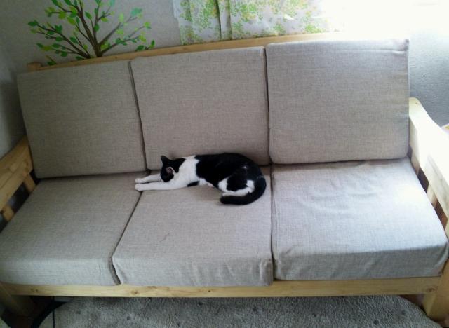 の いる 家 猫 ペットがいる家はロボット掃除機が重宝する! 水拭きもできる「Roborock