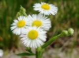 20120602 silgyecheon flower 7.jpg