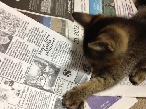 新聞とクゥ