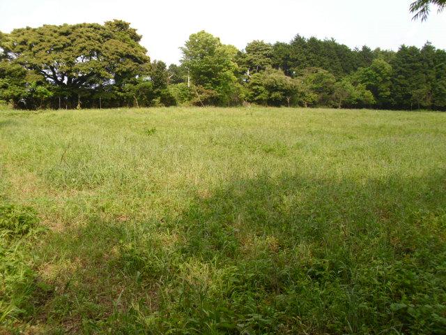 大きい畑20120517