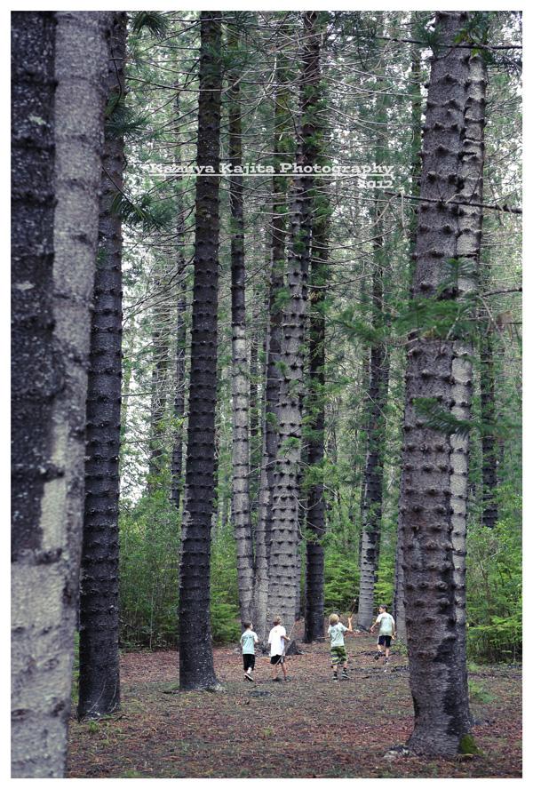 waahila-ridge-park-1.jpg