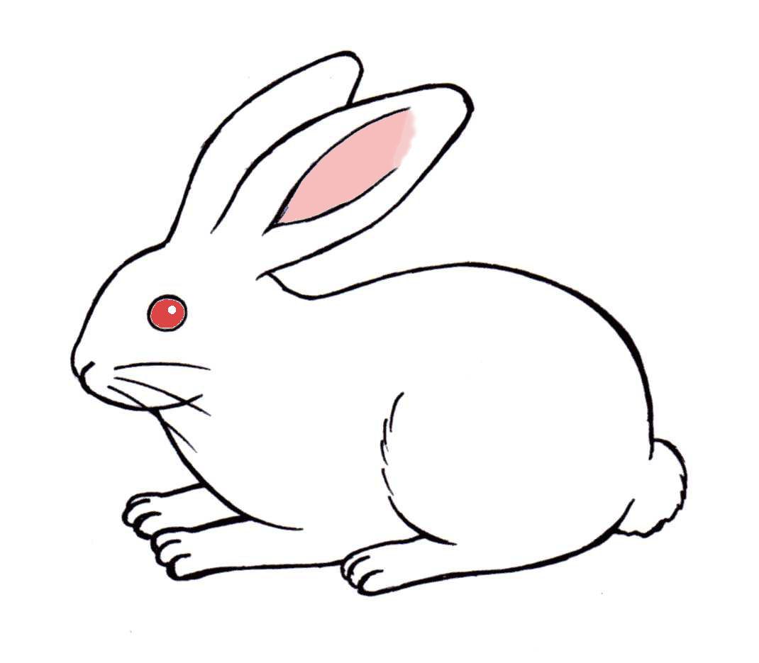 動物【犬・猫・ウサギ・パンダ】 | 元・日本語教師のイラスト集 - 楽天
