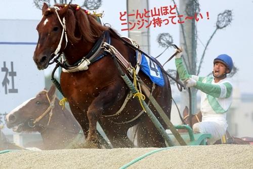ばんえい競馬