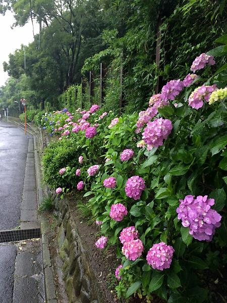 御所ヶ丘.jpg