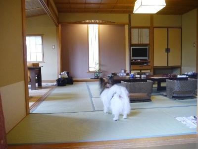 2012伊豆旅行5月2-3.JPG